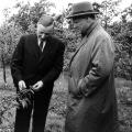 Vor diesem Hintergrund besuchte Brandt, zu diesem Zeitpunkt noch Regierender Bürgermeister von Berlin, am 19. Mai 1961 während des Wahlkampfs eine Obstbauversuchsanstalt.<br> Bildrechte: AdsD